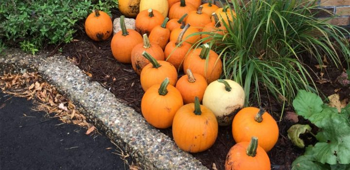 pumpkinpatch sized